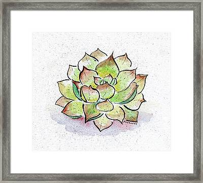 Succulent Framed Print by Diane Thornton