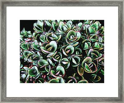 Succulent Fantasy Framed Print by Ann Powell