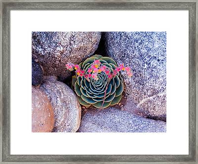 Succulent Flowers Framed Print by Mark Barclay