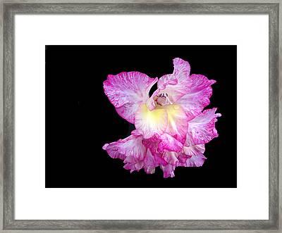 Succulent Gladiola Framed Print