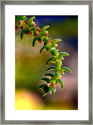 Succulent Hanging Framed Print