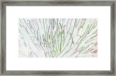 Succulent Leaves In High Key Framed Print