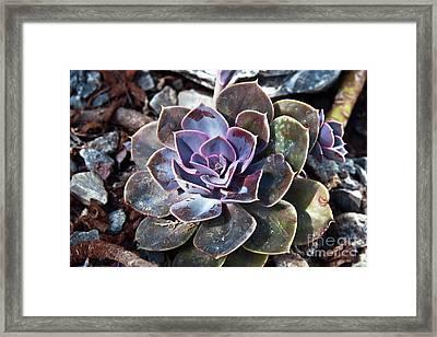 Succulent Plant Poetry Framed Print