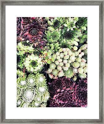 Succulent Plants Background  Framed Print