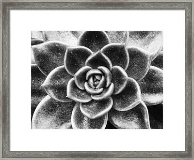 Succulent Symmetry Framed Print