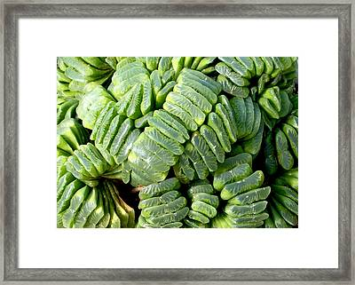 Succulents Framed Print by Mark Barclay