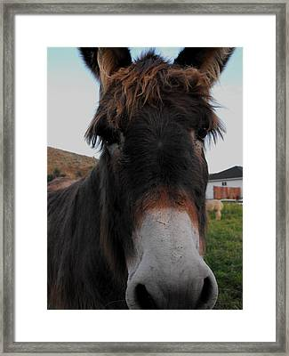 Such A Cute Face Framed Print by Jan  Tribe