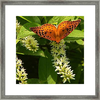 Such Lovely Wings Framed Print by Byron Varvarigos