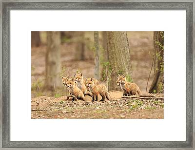 Sudden Alert Framed Print by Everet Regal