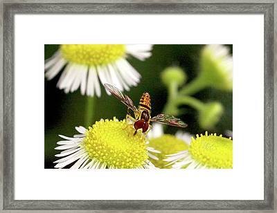 Framed Print featuring the photograph Sugar Bee Wings by Meta Gatschenberger