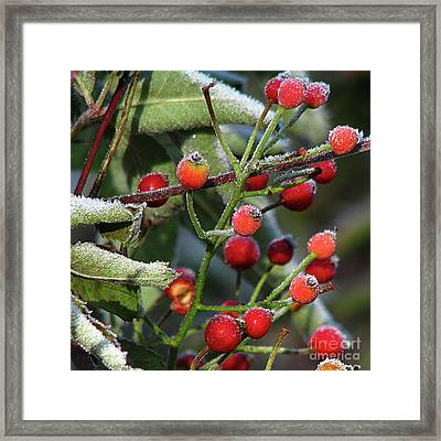 Sugar Coated Framed Print by Deborah Johnson