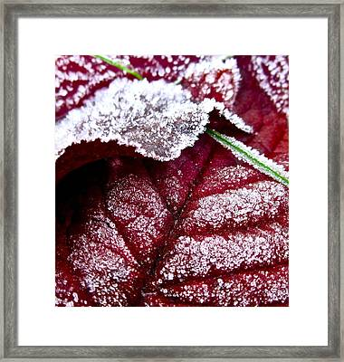 Sugar Coated Morning Framed Print by Gwyn Newcombe
