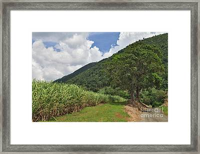 Sugar Country Framed Print