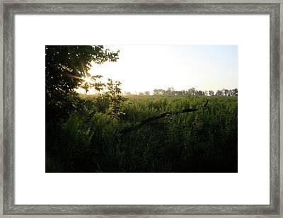Sugar Grove Day Break Framed Print