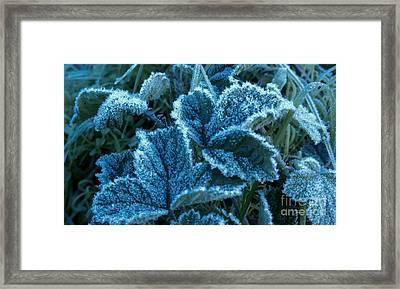 Sugar Ivy Framed Print
