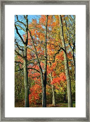Framed Print featuring the photograph Sugar Maple Brilliance by Ray Mathis
