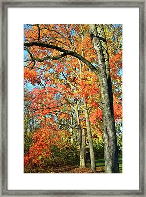 Framed Print featuring the photograph Sugar Maple Stand by Ray Mathis