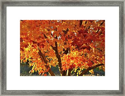 Framed Print featuring the photograph Sugar Maple Sunset by Ray Mathis