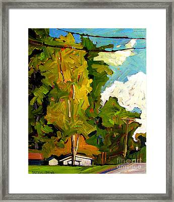 Sugar Maple Sunshine Framed Print