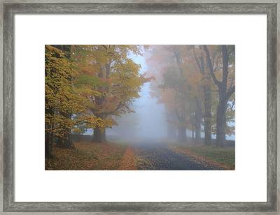 Sugar Maples On A Misty Country Road Framed Print by John Burk
