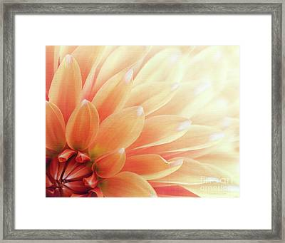 Sugar N Spice  Framed Print by Beve Brown-Clark Photography