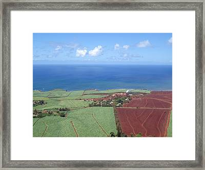 Sugar Plantation Framed Print
