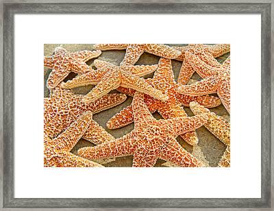 Sugar Starfish Framed Print by Betsy Knapp