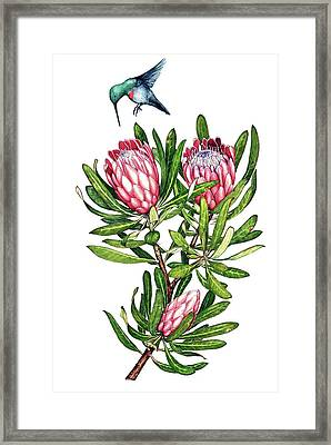 Framed Print featuring the painting Sugarbush And The Humming Bird by Heidi Kriel