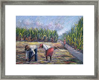 Sugarcane Harvest Framed Print