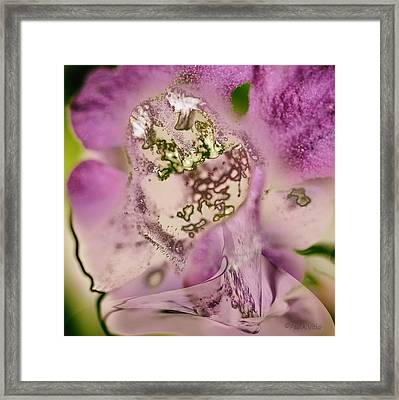 Sugar....sweetie Framed Print