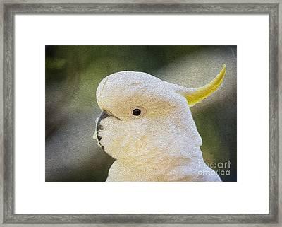 Sulphur Crested Cockatoo Framed Print by Avalon Fine Art Photography