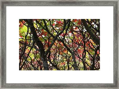 Sumac 53 Framed Print