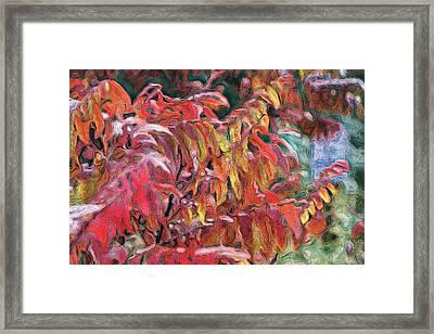 Sumac Swirl Framed Print