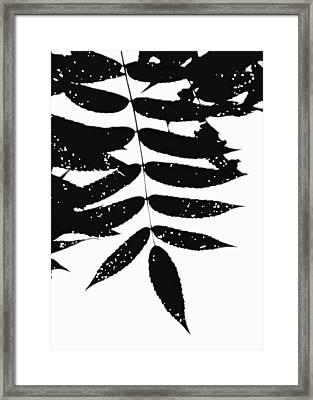 Sumac Framed Print by Tim Good