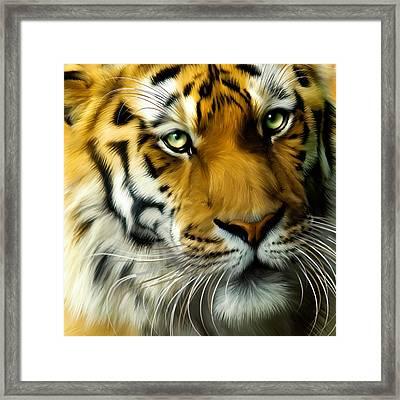 Sumatran Tiger Closeup Portrait Framed Print by Julie L Hoddinott