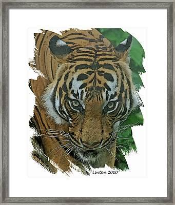Sumatran Tiger Framed Print by Larry Linton