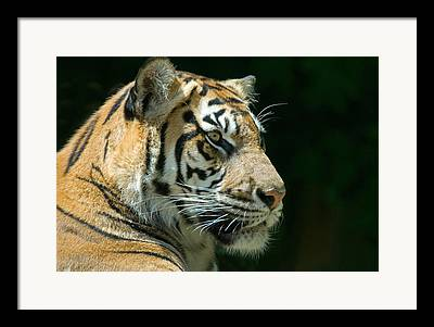 Fauna Framed Prints