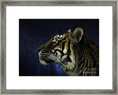 Sumatran Tiger Profile Framed Print by Avalon Fine Art Photography