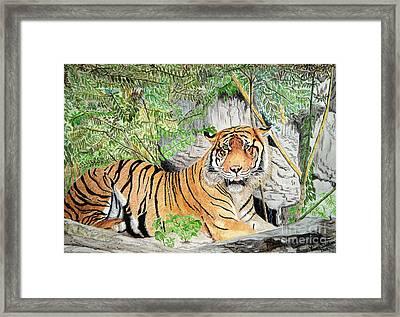 Sumatran Tiger Framed Print by Yvonne Johnstone