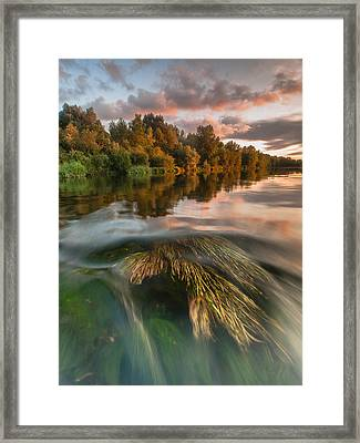 Summer Afternoon Framed Print by Davorin Mance