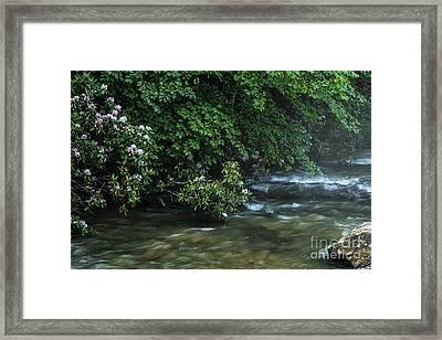 Summer Along Birch River Framed Print by Thomas R Fletcher