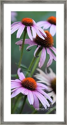 Summer Framed Print by Amanda Barcon