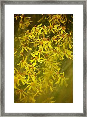 Summer Asters Framed Print by Mary Lee Dereske
