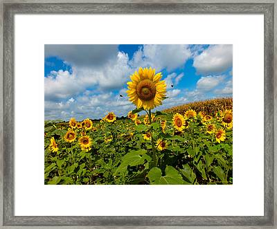 Summer At The Farm Framed Print