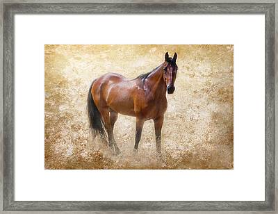 Summer Bay Framed Print by Michelle Wrighton