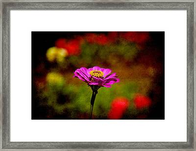 Summer Beauty Framed Print