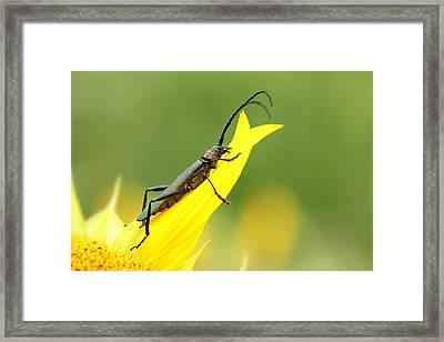 Summer Beetle Framed Print by Heike Hultsch