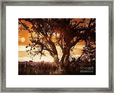 Summer Blaze Framed Print by Leslie Hunziker