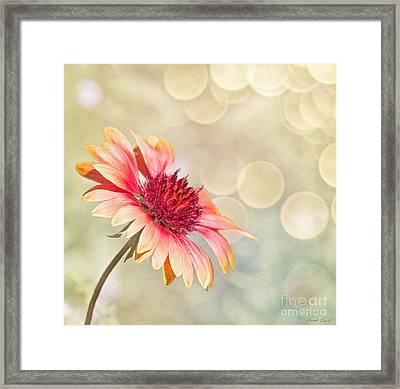 Summer Bliss Framed Print by Linda Lees