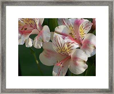 Framed Print featuring the photograph Summer Bloom IIi by Jake Hartz